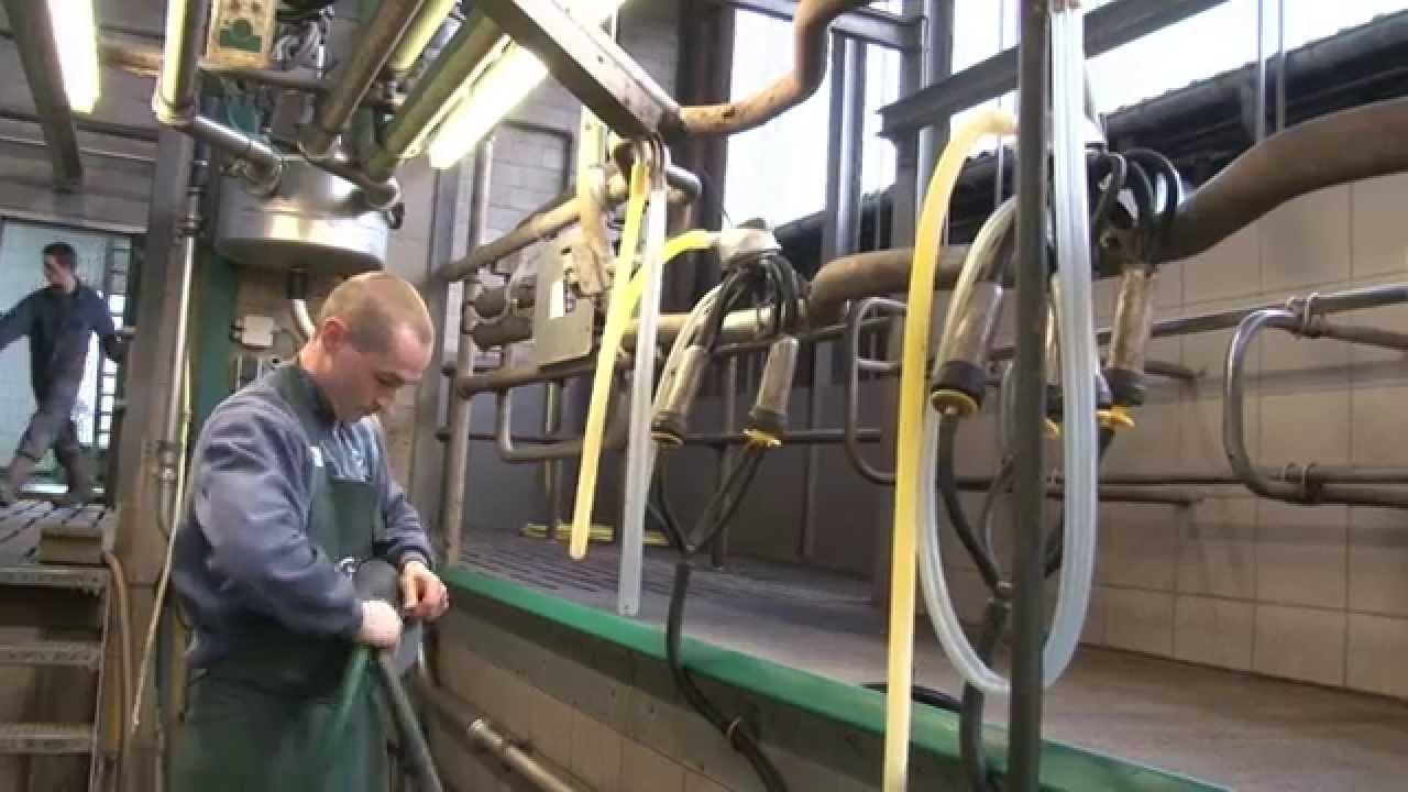 AB Brabant Service Team Melkveehouderij