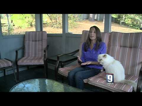 Kelly Downing on local New Hampshire News