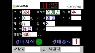 예천축산농협 11월 13일 경매가축시장