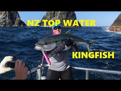 Big NZ Top Water Kingfish Hookup & Fight Action