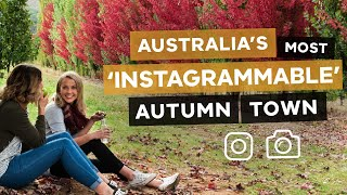 Australia's Most Instagrammable Autumn Town - Bright, Victoria