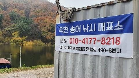 2020년 11월01일 라이브 (송어낚시) 서울경기권에서 가까운 직천낚시터에서 송어손맛 보자!!!