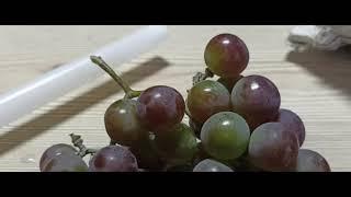 Как быстро отжать сок у винограда на вино. Лучший быстрый метод