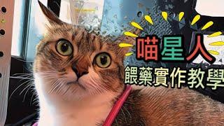 超實用|貓咪餵藥實作教學|專業概念|高雄中興動物醫院|貓診專業助理教學
