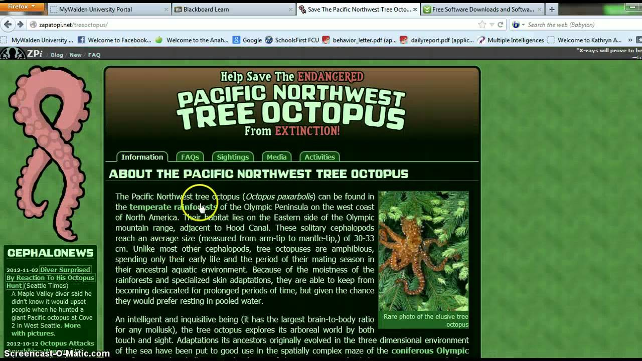 Pacific Northwest Tree Octopus - YouTube