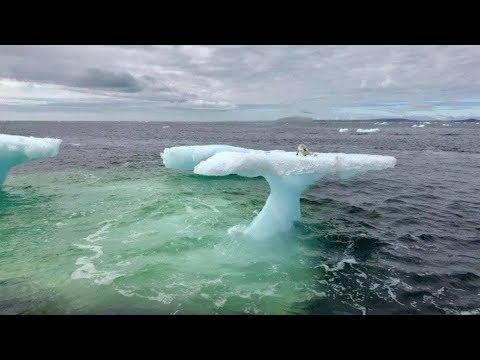 Смотреть Рыбаки думали что это тюлень на дрейфующей льдине, но когда приблизились то сильно удивились онлайн