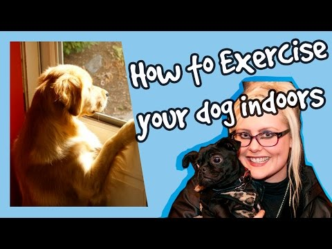how-to-keep-your-dog-occupied-indoors!-indoor-exercise-for-dogs!