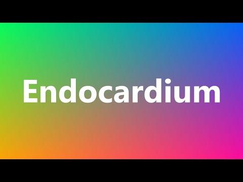 Endocardium - Medical Definition and Pronunciation