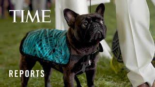Inside the 2021 Westminster Dog Show