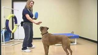 Dog Agility Exercises : Dog Training Obstacles: The Target