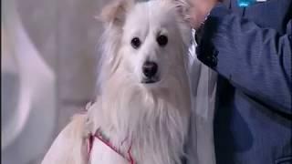 أخر النهار - جابر القرموطي يظهر بكلب على الهواء بسبب قرار دار الأفتاء حول تربية الكلاب