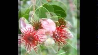 Любимые растения-Акка