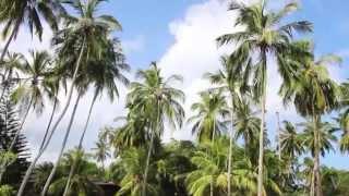 видео Шри Ланка. Обзор страны. Достопримечательности, традиции и многое другое. Вокруг света