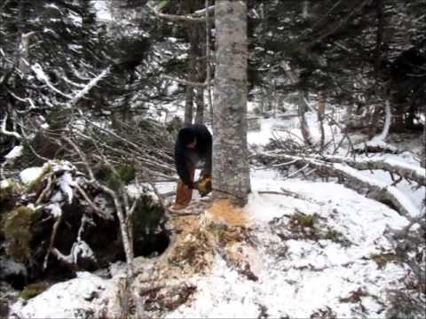 copue de bois 2012 video.wmv