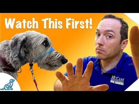 Before You Use A Dog Training Head Collar, Watch This Video - Professional Dog Training Tips