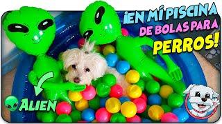 Perro Divertido vs Broma Alien en Piscina de BOLAS para PERROS!👽🐶Anima Dogs