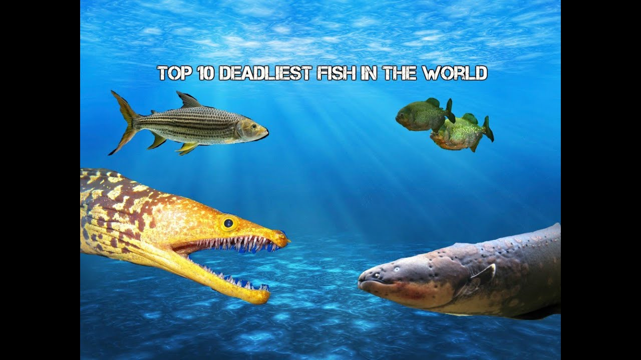 Top 10 deadliest fish in the world youtube for Best fishing in the world