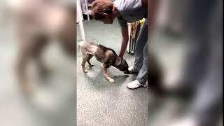 Спасенная жителями Твери собака