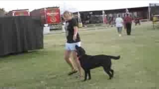 Line Dancing Dog, Silly Dog
