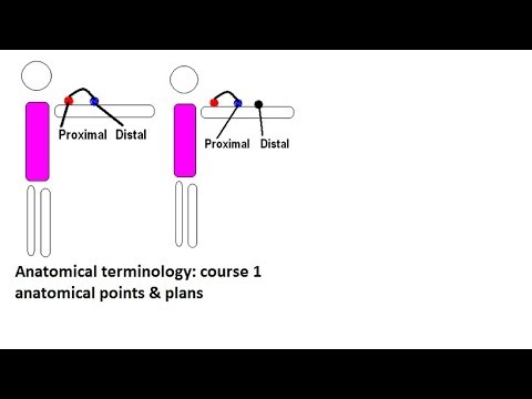 Anatomical terminology : course 1(anatomical position & planes)