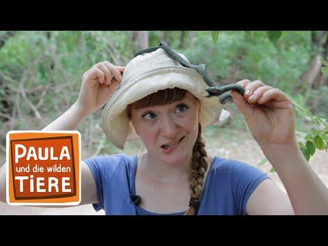 Vorsicht Schlange Doku Reportage Fur Kinder Paula Und Die Wilden Tiere Youtube