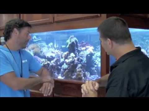 WetPets 460 Gallon LED Mixed Reef - ReefKeeping Video by AmericanReef - Start a Saltwater Aquarium