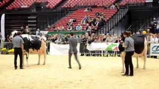 Concours Regional Normandie Prim'Holsteins 2014 à Ferme en Fête (Alençon)