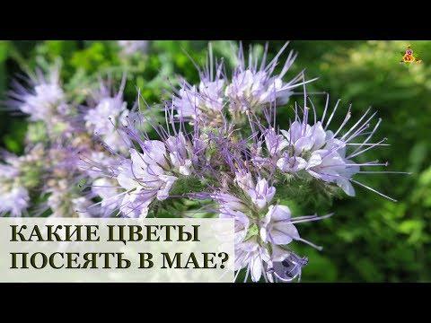 Вопрос: Какие однолетники могут цвести уже в мае?