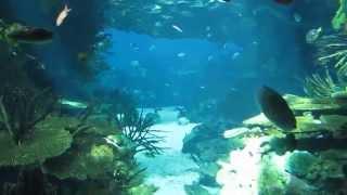 Lisbon Oceanarium sights