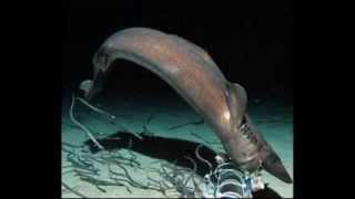 Creatures From the Dark Abyss and Other Sea Creatures