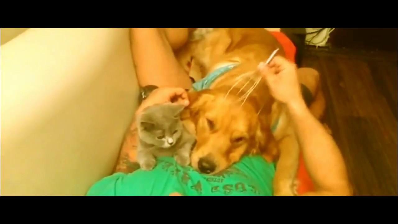 Köpeğim Deniz ve Kedim Peri'ye Masaj