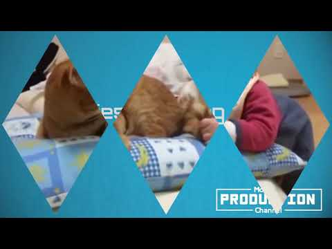 (Babies and cats) Masti zaady vines