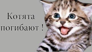 Котята погибают !