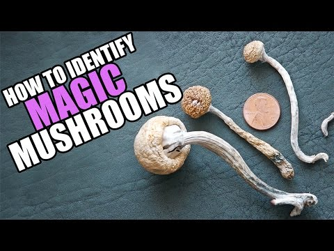 Drug Special: This is How You Identify Magic Mushrooms