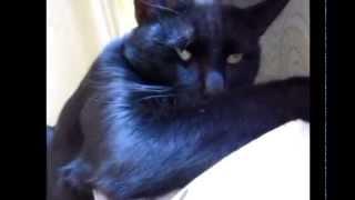 Кот на батарее