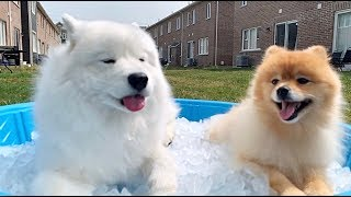 [ENG Sub] my dogs reaction to ice bath on a hot summer day