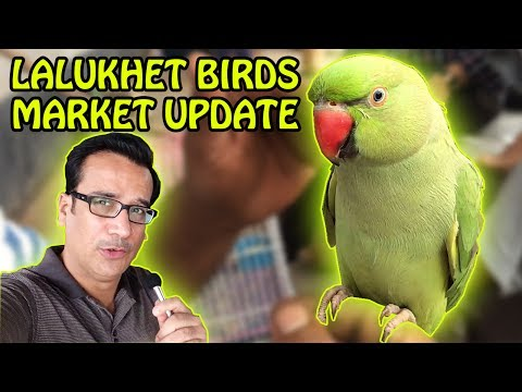 Birds for Sale in Cheap Prices   Karachi BIRDS Market Lalukhet   Video in URDU/Hindi