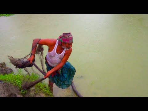 Net Fishing In Village |  Traditional Fish Catching In Village When Raining