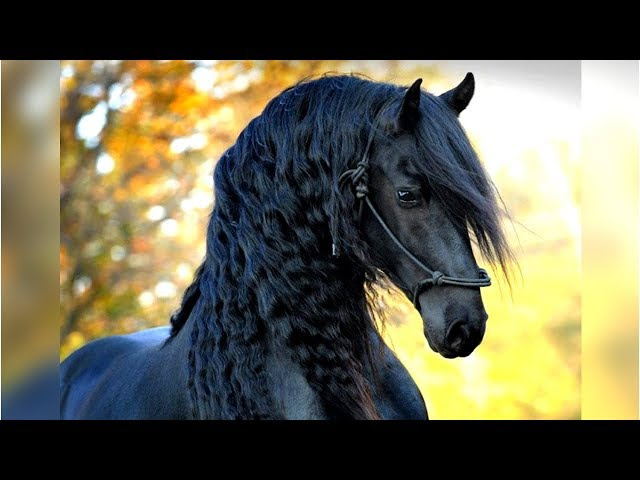 8 Most Beautiful Horses on Planet Earth