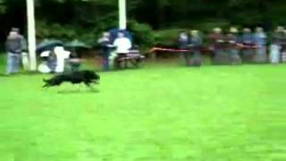 Great German Shepherd Dog Attacks