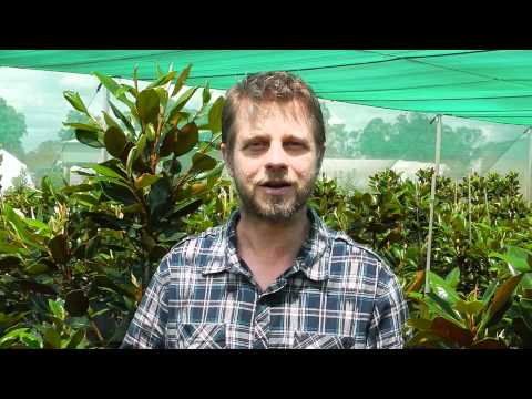 Warren Downes introduces the Downes Wholesale Nursery Sydney