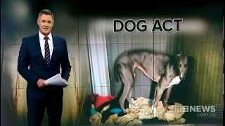 Dog Act | 9 News Perth