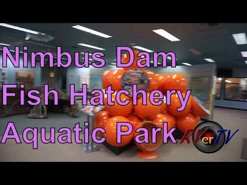 Nimbus Dam...Fish Hatchery...Park...American River Parkway....RVerTV
