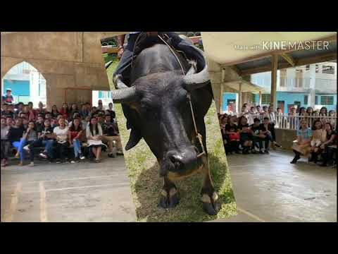 Luis M. Reynoso C. La vaca. Lake view academy. Philippines