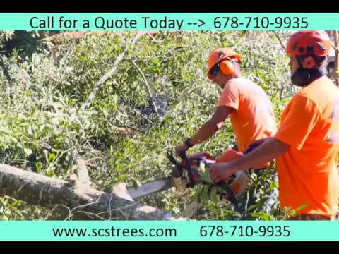 tree-services-woodstock-ga-|-acworth-tree-removal
