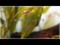 Download Three DIYs for Neon Tetras! MP3 song and Music Video