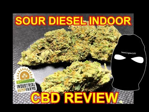 Sour Diesel Indoor Flower Industrial Hemp Farms Review!