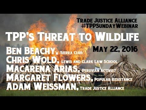 TPP's threat to wildlife #TPPSundayWebinar Ben Beachy Chris Wold Macarena Arias