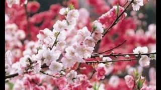 在那桃花盛開的地方 蔣大為