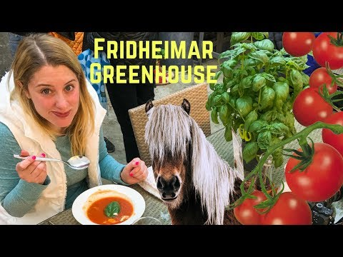 GEOTHERMAL TOMATO FARM | Reykholt, Iceland